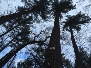 Black's Woods