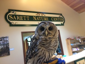 Barred Owl Cookie